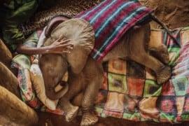 Guerrieri che una volta temevano gli elefanti ….