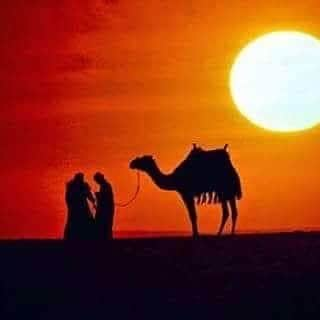 Come cammelli