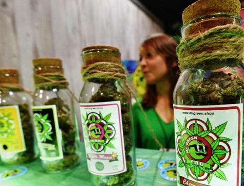 Vietata la vendita dei prodotti derivati dalla Cannabis. Lo stabilisce la Cassazione.