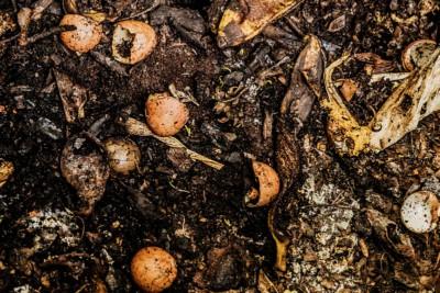 compost organico (Image: Philip Cohen | Wikipedia)