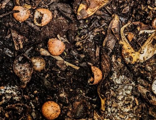 Che ne direste di essere compostati dopo la morte ed usati come fertilizzante organico?
