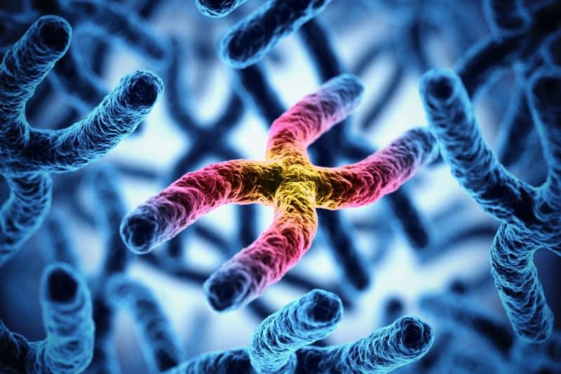 Cromosomi