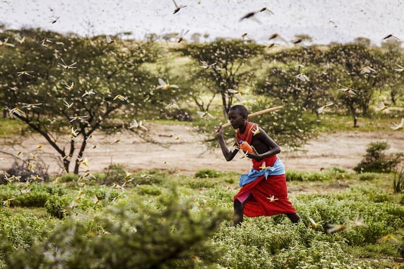 kenia invasione delle cavalette (foto AP)