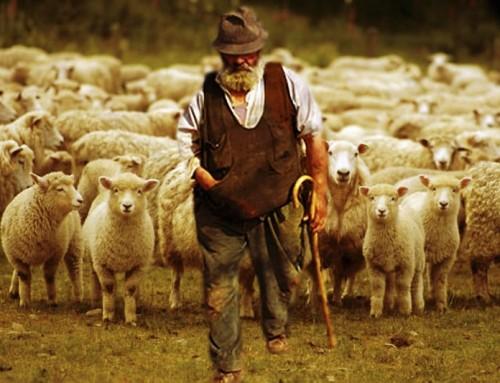 """Card. Sarah:  I pastori della Chiesa, nel loro desiderio di essere """"buoni cittadini"""", hanno troppo spesso perso di vista la loro missione più importante."""