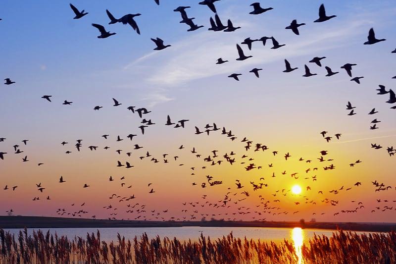 Uccelli-al-tramonto