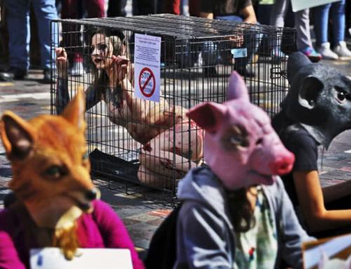 """Pedrizzi: """"Avanza una folle ideologia animalista che pone gli animali prima dei bambini e delle donne, come gli integralisti in India…"""""""