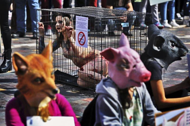 sperimentazione-animale-protesta-animalisti-ansa