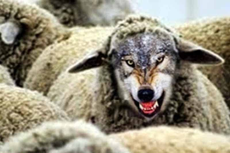 lupo-vestito-da-pecora