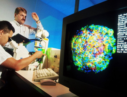 Gli scienziati creano con successo un embrione da cellule umane e di scimmia